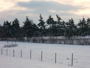 Carlton Park in the snow