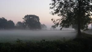A misty hollow in the fields