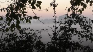 Mist shrouded fields