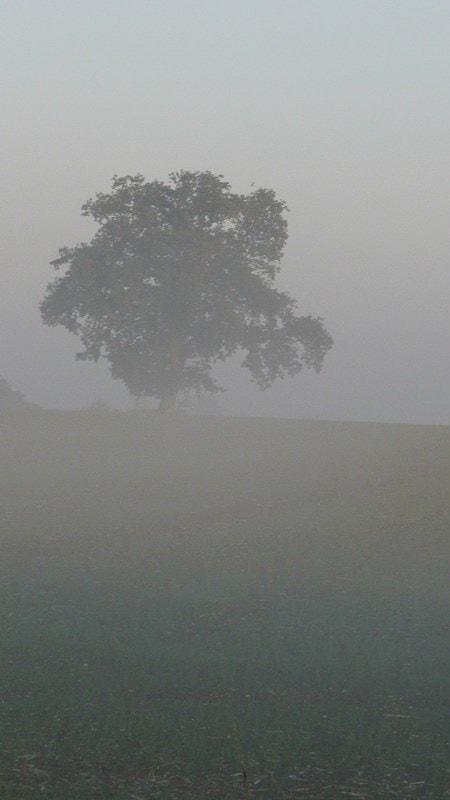A misty morn in Carlton