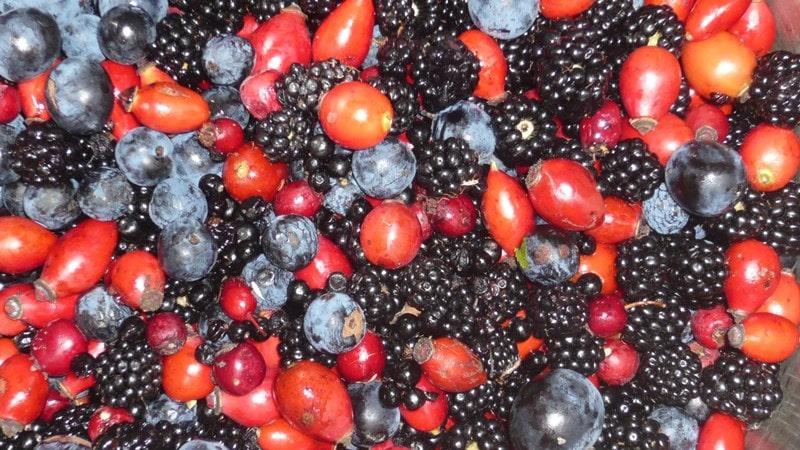 Local hedgerow bounty - wild fruits