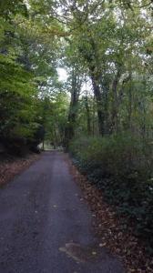 A quiet Kelsale country lane