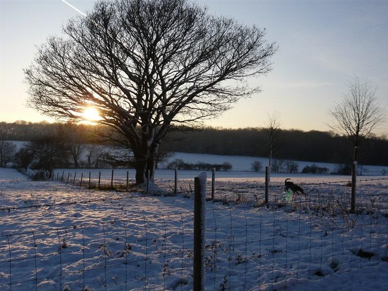Winter in Carlton Park